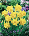 Narcissus TR Exception